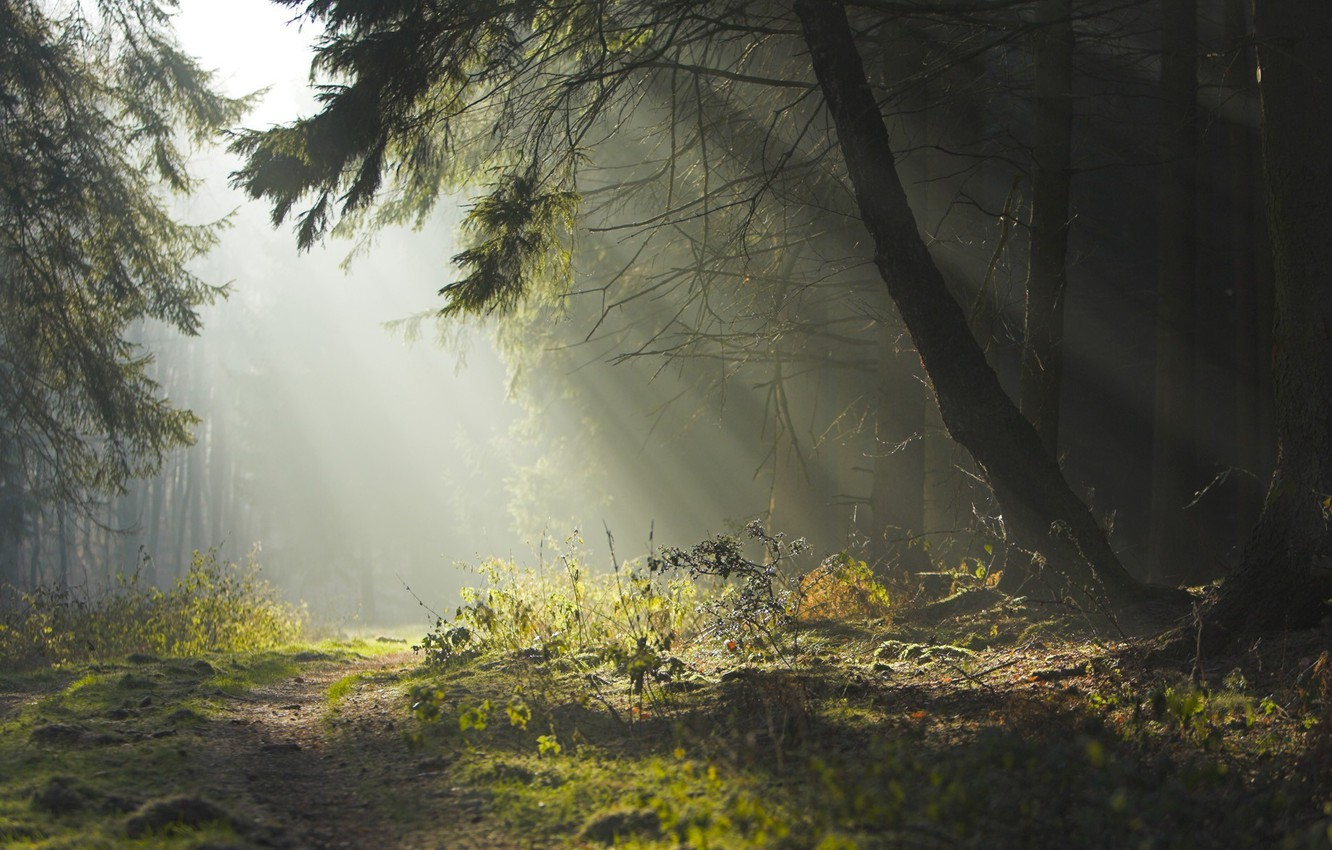 Photo wallpaper road, forest, summer, trees, nature, beauty, the evening, morning, haze, path, the sun's rays
