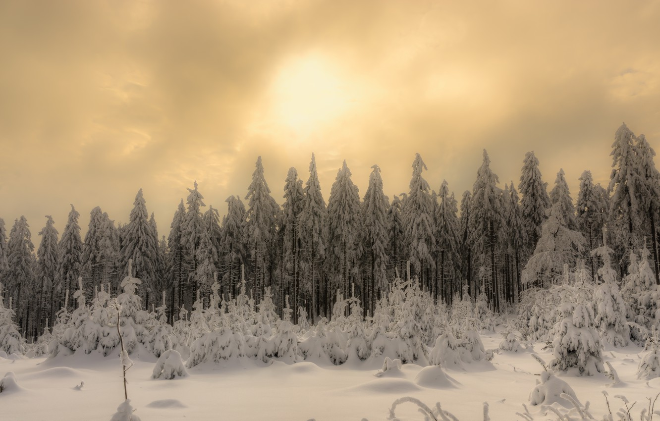 Photo wallpaper winter, forest, snow, nature, morning