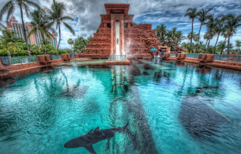 Photo wallpaper palm trees, shark, pool, Bahamas, Bahamas, Nassau, Nassau, Atlantis Hotel