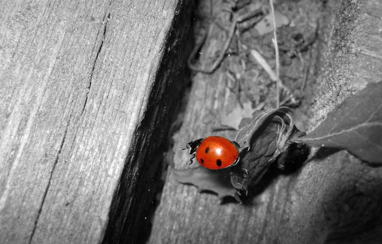 Photo wallpaper white, black, Beetle, red