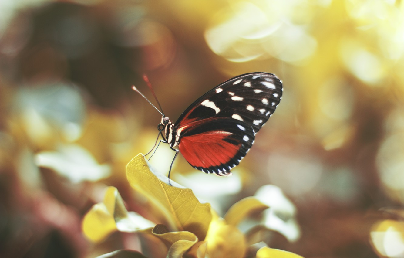 Photo wallpaper butterfly, wings, insect