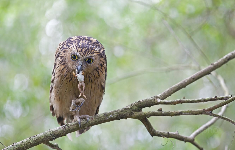 Photo wallpaper trees, branches, owl, bird, foliage, frog, killer, mining