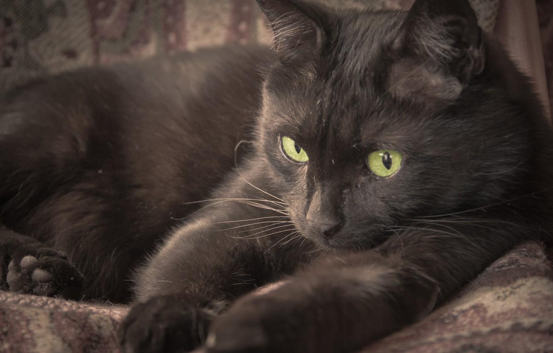 Photo wallpaper eyes, cat, black