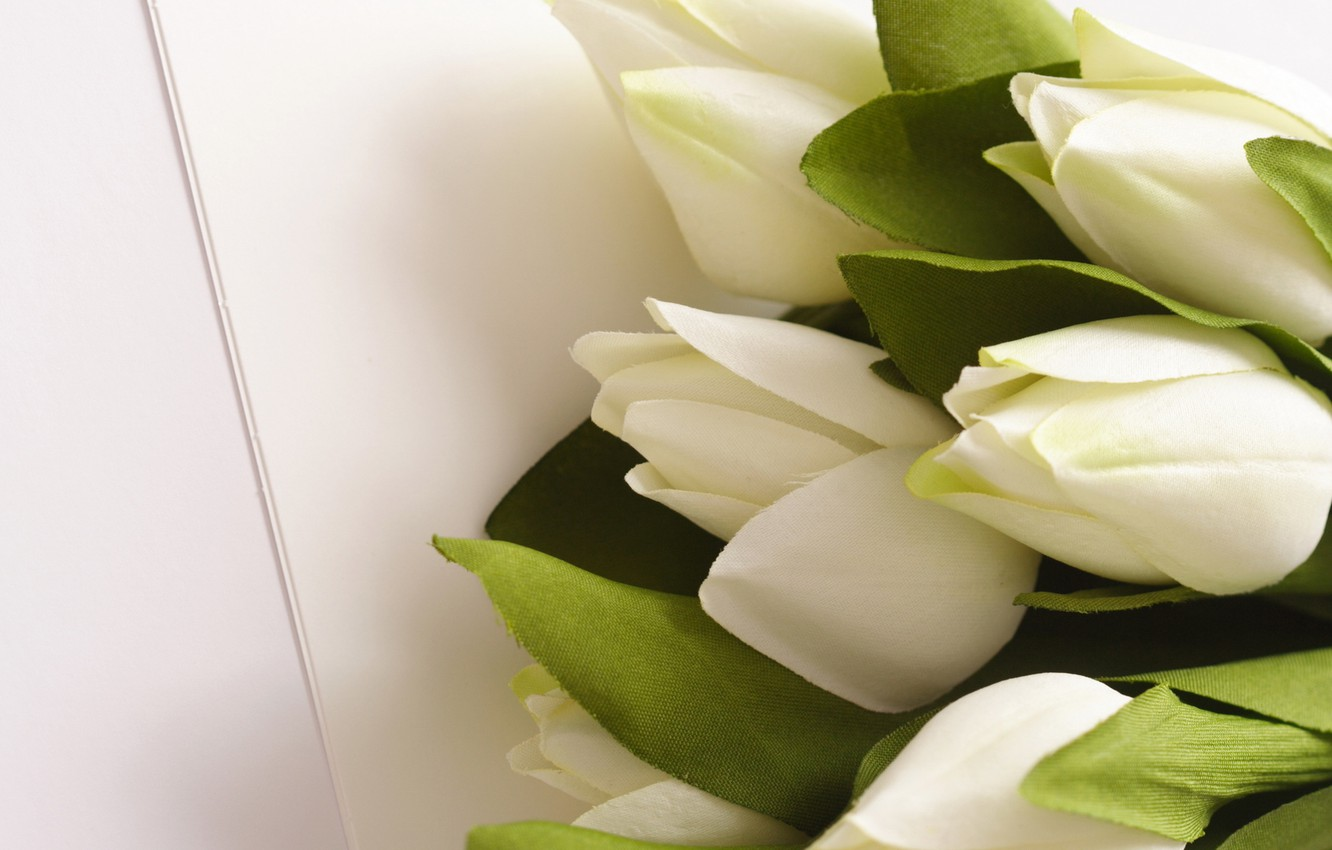 Photo wallpaper leaves, flowers, bouquet, green, tulips, white