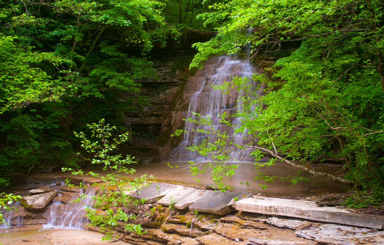Photo wallpaper greens, forest, water, freshness, nature, green, waterfall, spring, forest, water, leaves, waterfall