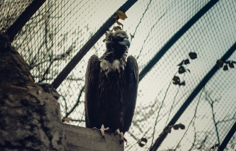 Photo wallpaper bird, eagle, dark, zoo, eagle