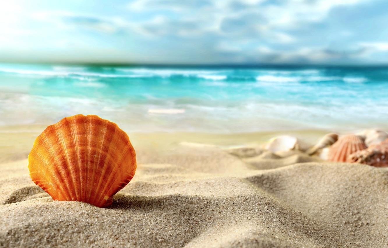 Photo wallpaper sand, sea, beach, shell, summer, beach, sea, sand, shell
