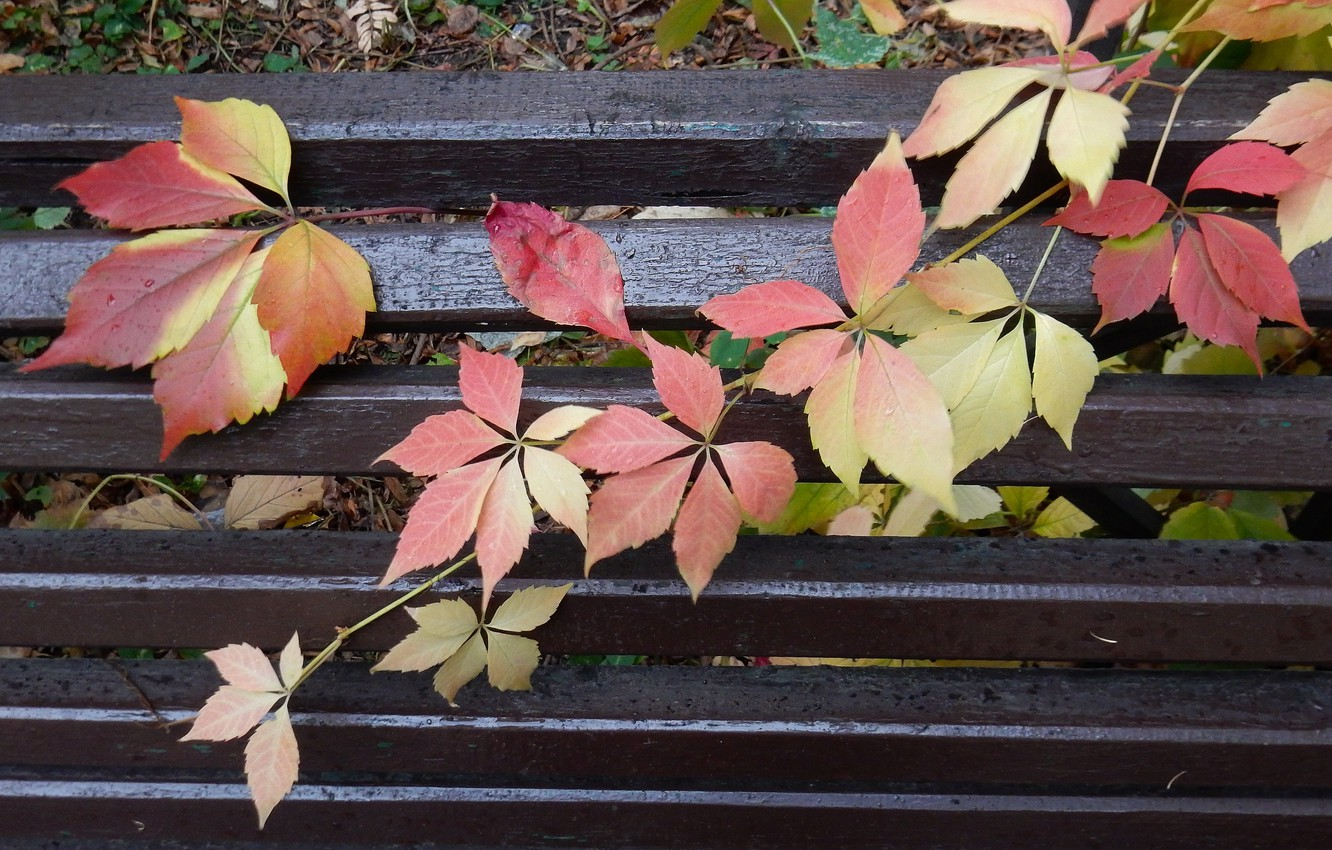 Bench Fall Leaves Hd Wallpaper Eazy Wallpapers
