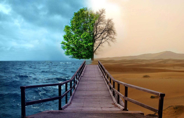 Photo wallpaper sea, water, creative, tree, desert, track