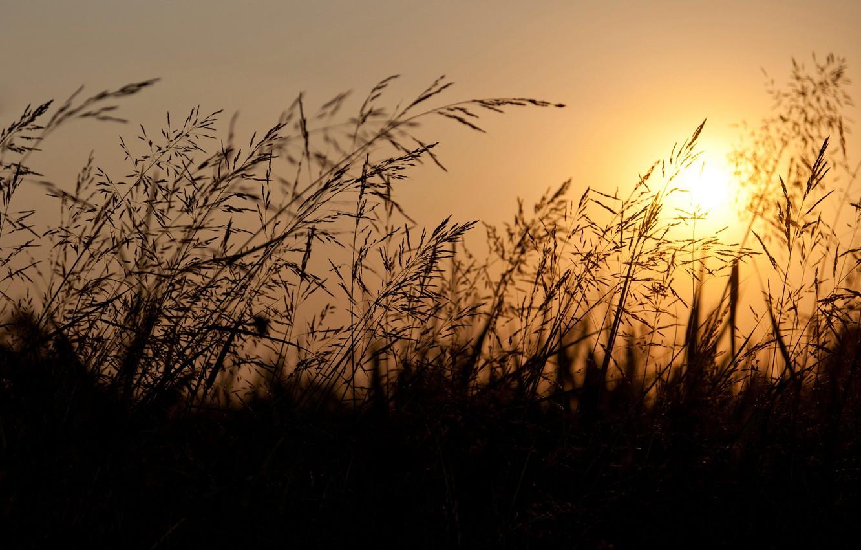 Photo wallpaper the sky, the sun, sunset, Field, the evening, ears, orange
