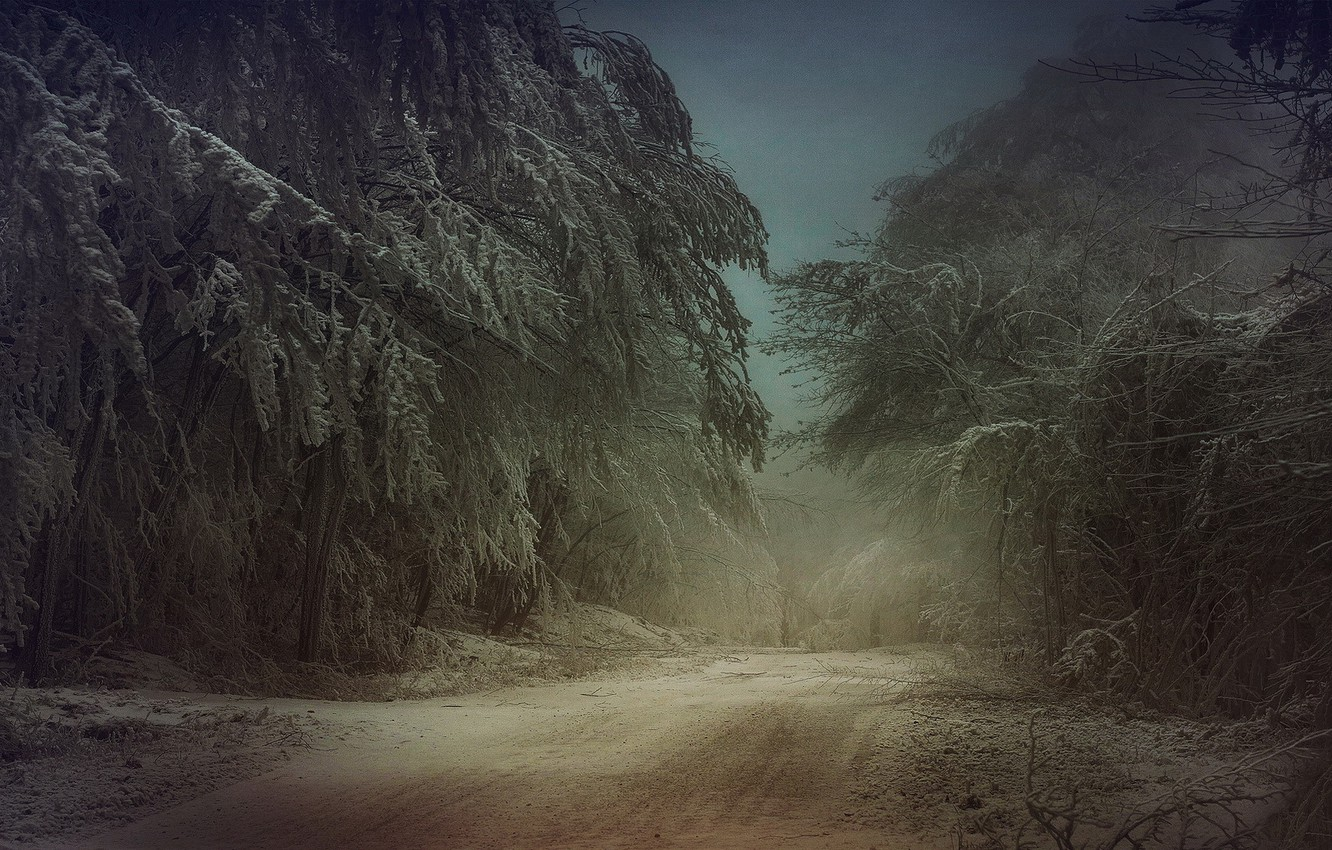 Photo wallpaper cold, winter, frost, road, forest, snow, trees
