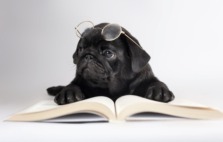 Photo wallpaper dog, glasses, book