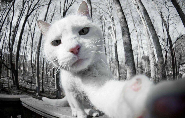 Photo wallpaper white, cat, photo, white, cat, selfie, on camera