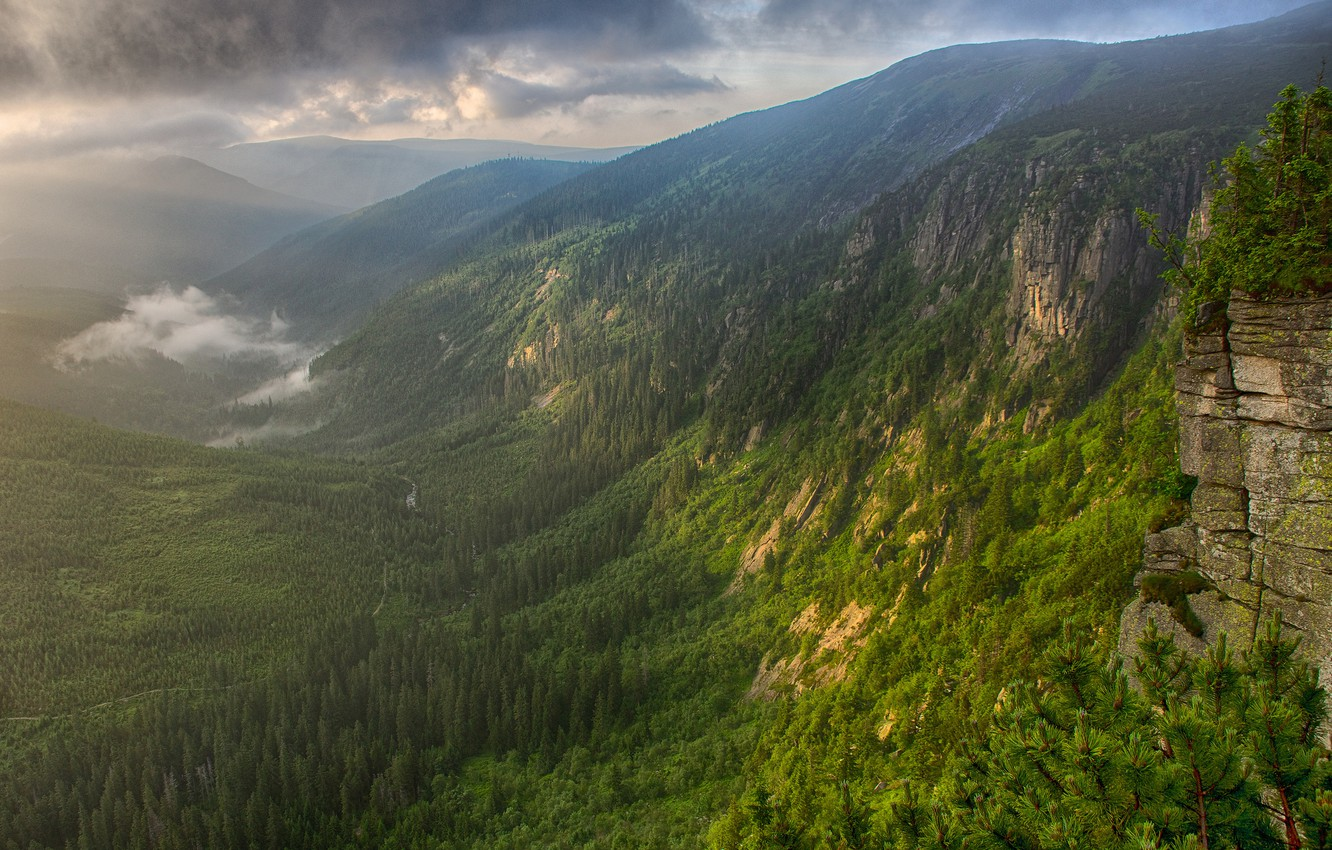 Photo wallpaper forest, mountains, fog, river, morning, valley