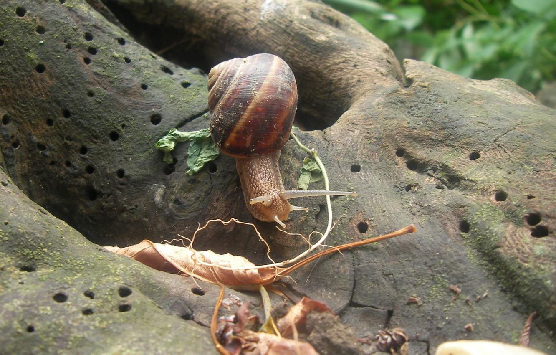 Photo wallpaper summer, leaves, tree, snail, Akela White