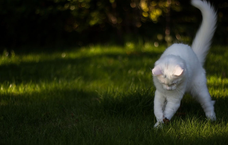 Photo wallpaper white, grass, cat, the game, Koshak