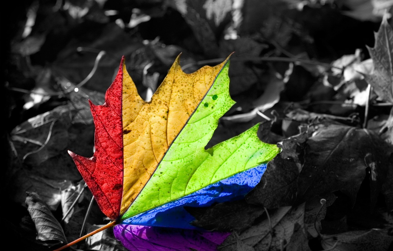 Photo wallpaper happiness, leaf, rainbow