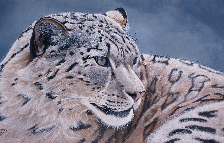 Photo wallpaper IRBIS, snow leopard, snow leopard