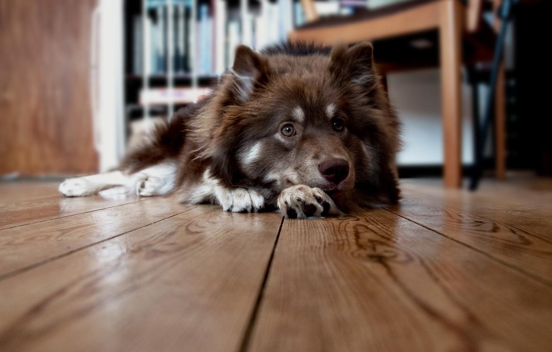 Photo wallpaper house, dog, floor