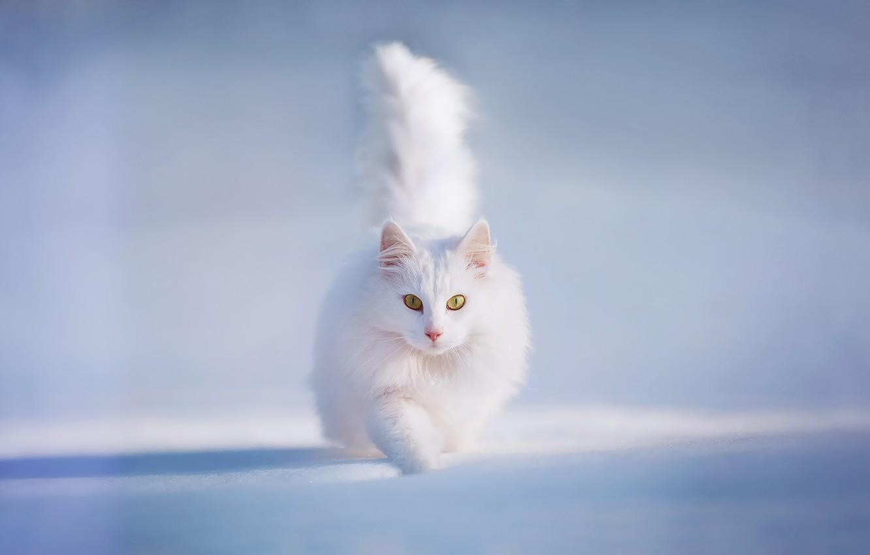 Photo wallpaper cat, cat, snow, yellow eyes, Kotecha, white and fluffy