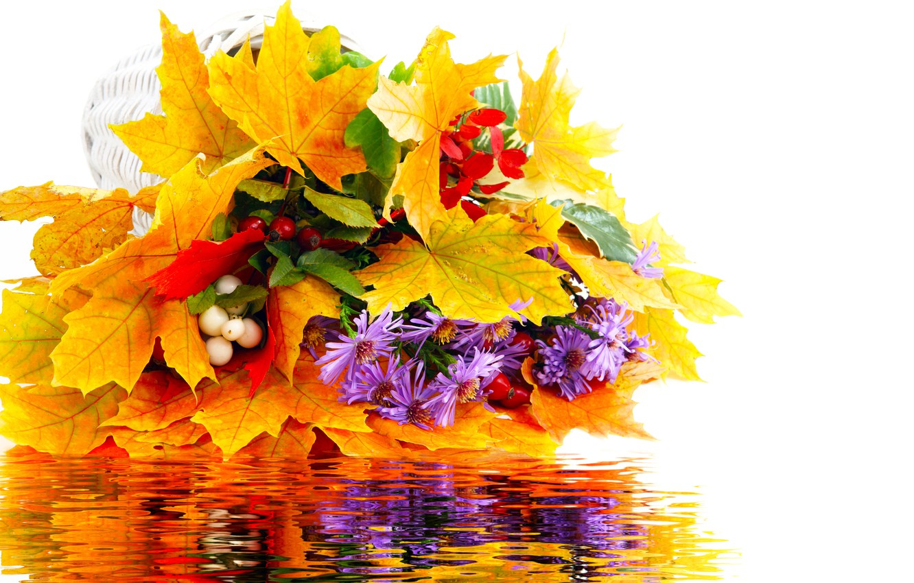 Photo wallpaper autumn, leaves, water, flowers, reflection, bouquet