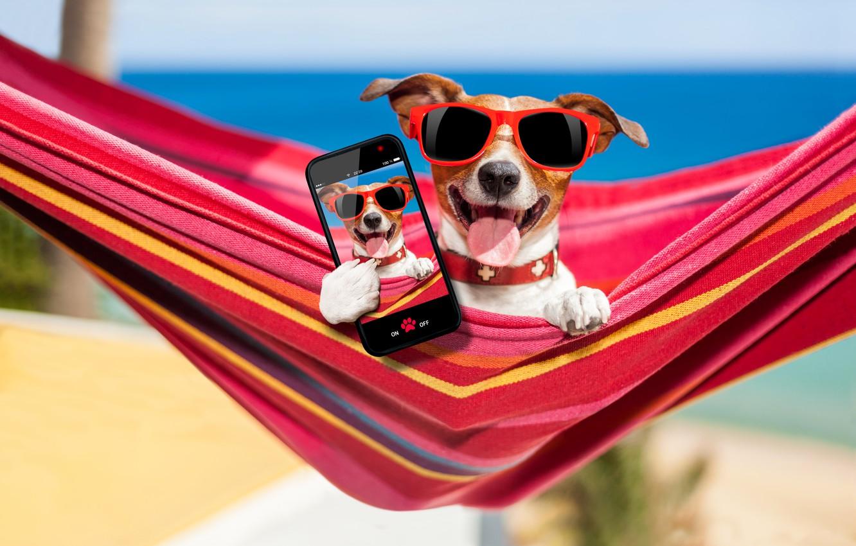 Photo wallpaper sand, sea, beach, photo, stay, glasses, hammock, bokeh, smartphone, Jack Russell Terrier
