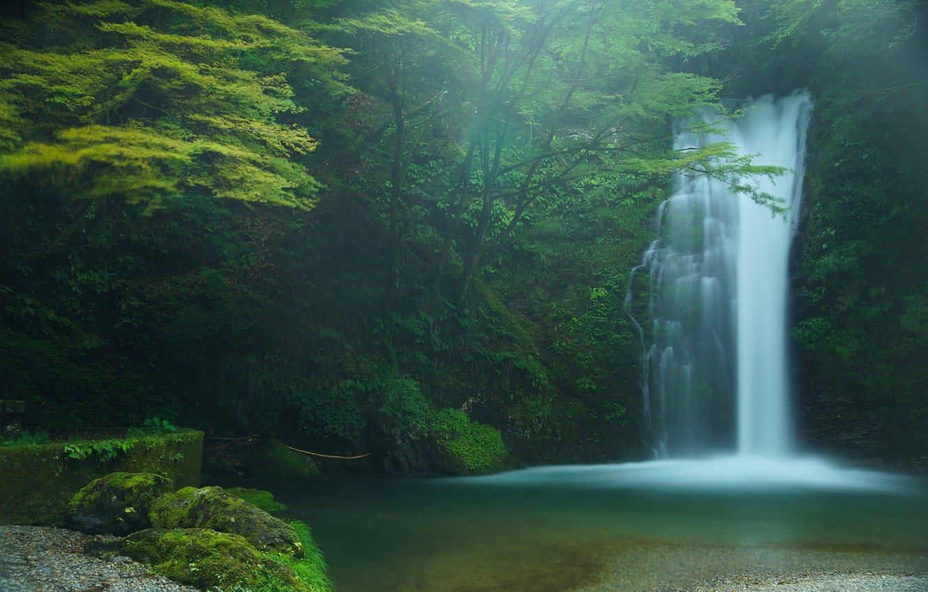 Photo wallpaper forest, trees, waterfall, Japan, Japan, Fujinomiya, Fujinomiya, Shiraito Falls, Shiraito falls