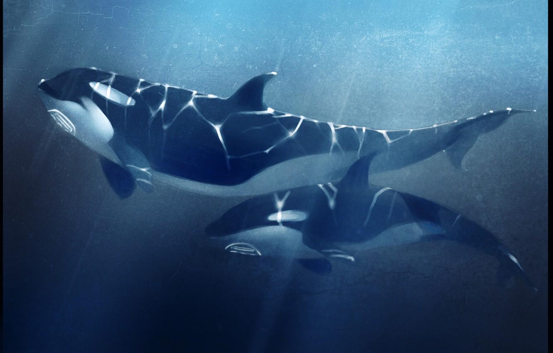 Photo wallpaper sea, depth, whale, orcas