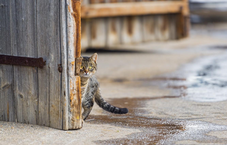 Photo wallpaper cat, look, street