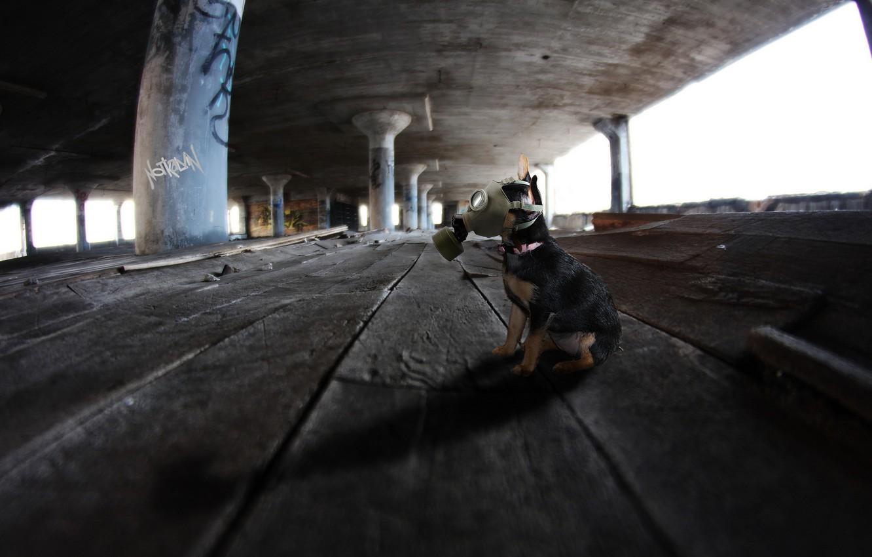 Photo wallpaper background, dog, gas mask