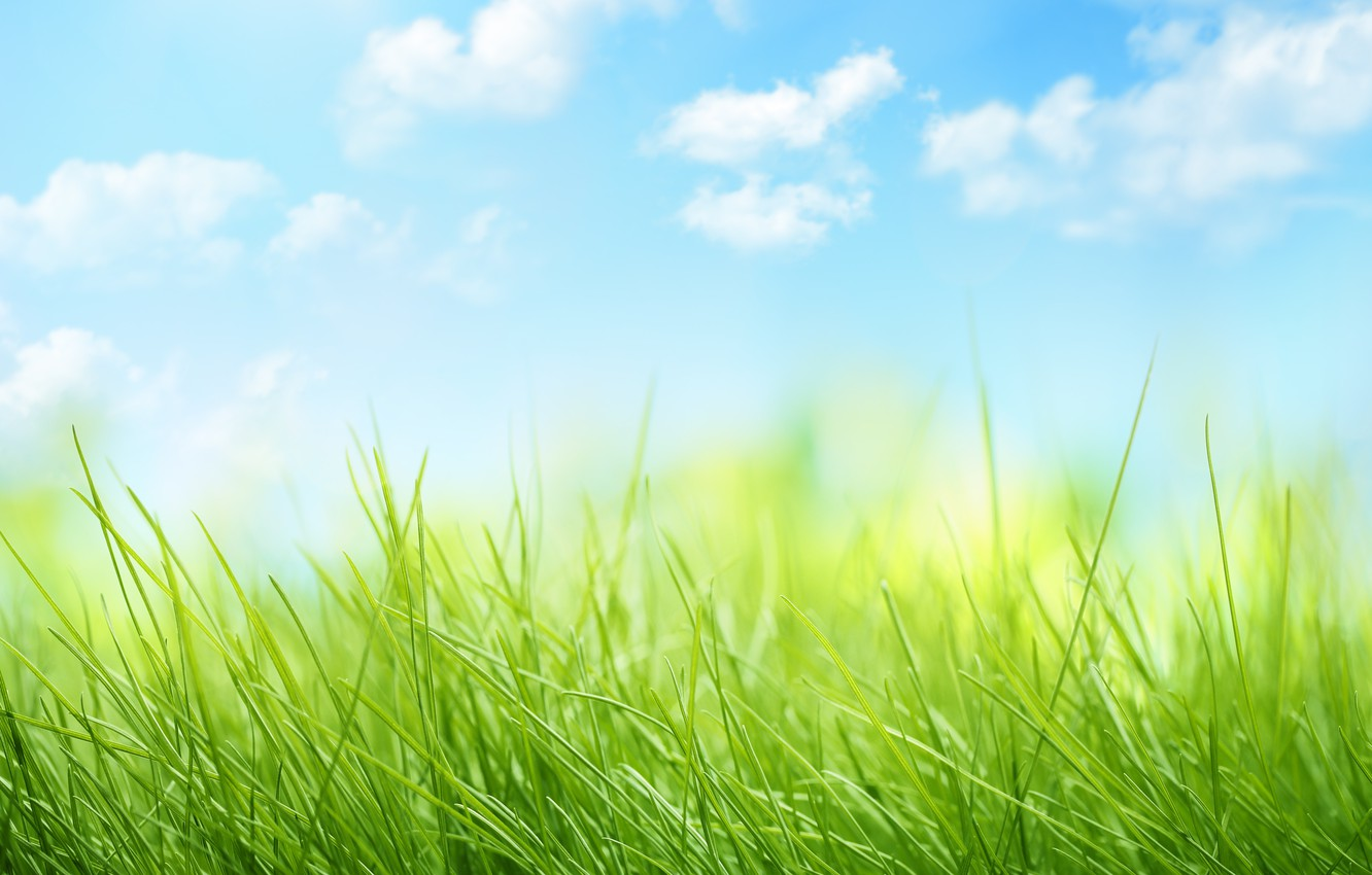 Photo wallpaper the sky, clouds, nature, grass, weed, sky, nature, clouds