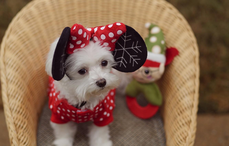Photo wallpaper look, basket, dog, ears