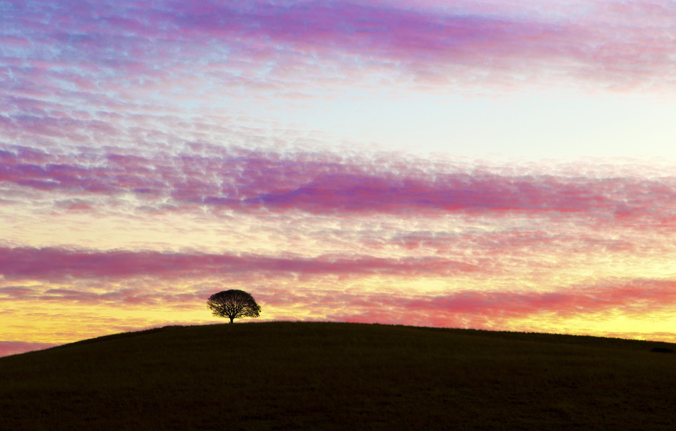 Photo wallpaper the sky, clouds, sunset, tree, the evening, hill, Australia
