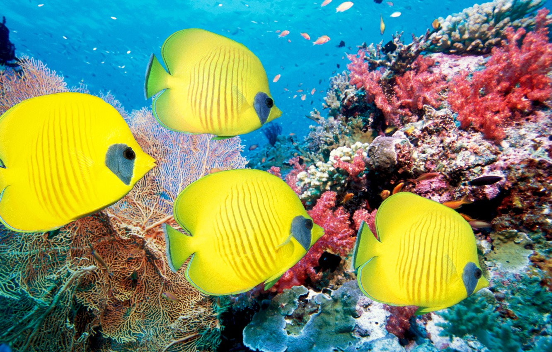 Photo wallpaper sea, fish, fish, corals, underwater world