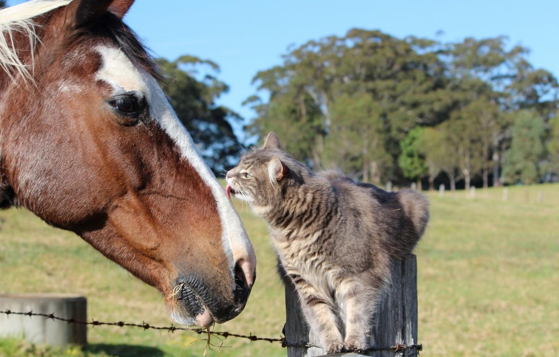 Photo wallpaper cat, cat, horse, horse, friendship, friends