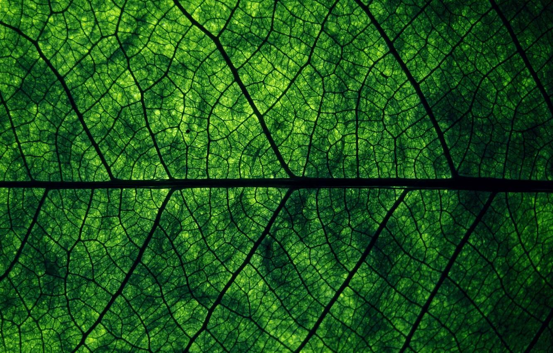 Photo wallpaper greens, macro, nature, sheet, structure, texture, veins, macro, leaf