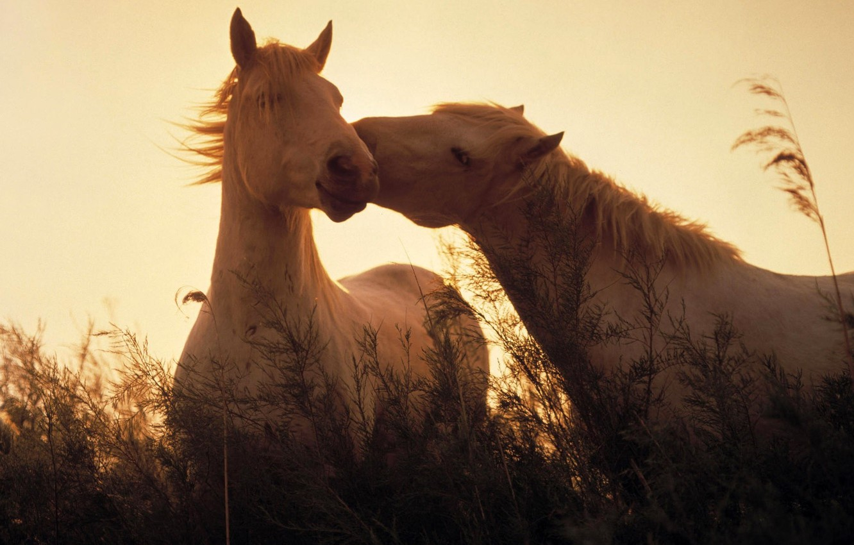 Photo wallpaper grass, light, horses, horse, light, grass, Animals, animals, horses