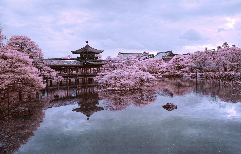 Photo wallpaper pond, reflection, Japan, Sakura, Kyoto