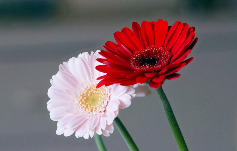 Photo wallpaper flowers, nature, plant, petals, stem