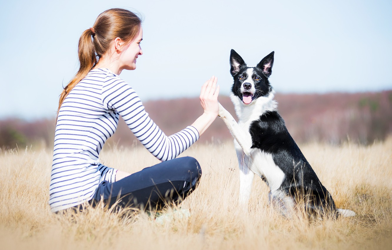 Photo wallpaper girl, nature, dog