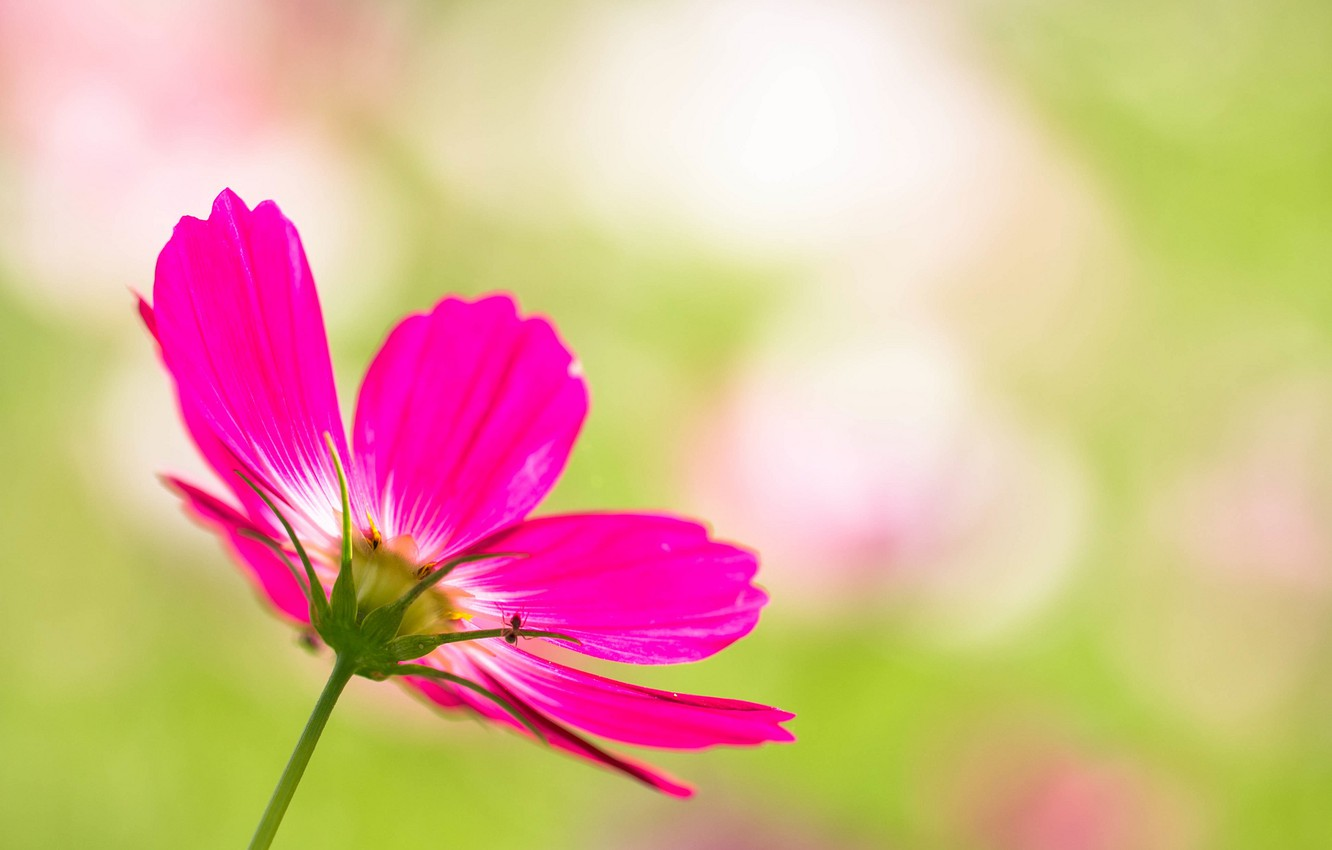Photo wallpaper flower, nature, plant, petals, stem