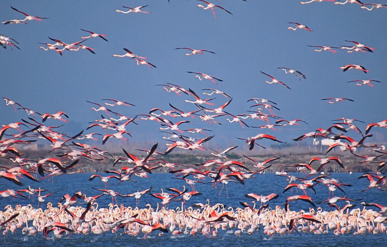 Photo wallpaper the sky, birds, lake, pack, Flamingo