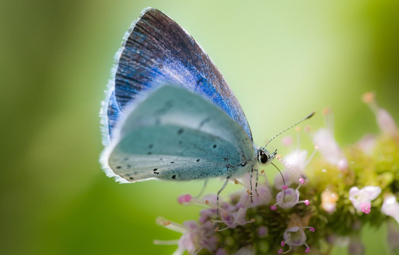 Photo wallpaper flower, macro, background, butterfly