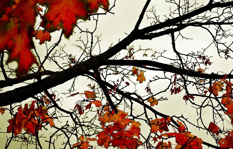 Photo wallpaper autumn, the sky, leaves, trees, orange