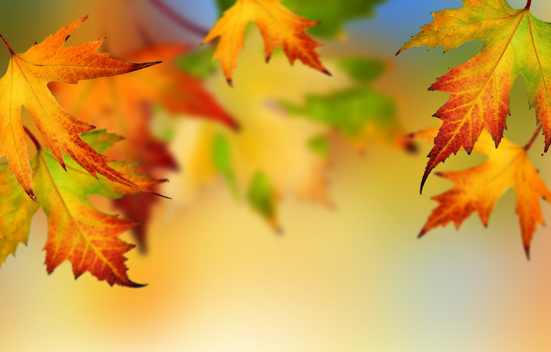 Photo wallpaper autumn, leaves, bright colors