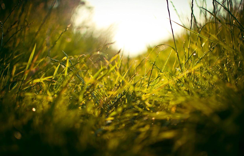 Photo wallpaper greens, field, grass, macro, freshness, weed, path, stems, travicka, stem