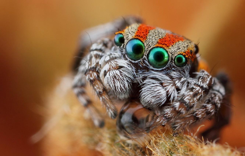 Photo wallpaper eyes, look, macro, spider, jumper