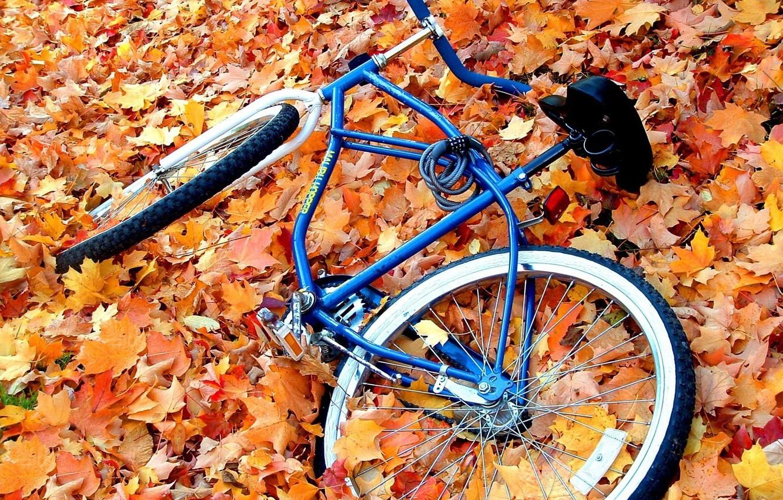 Photo wallpaper autumn, leaves, yellow, bike, great, abandoned