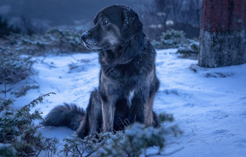Photo wallpaper winter, snow, dog, dog