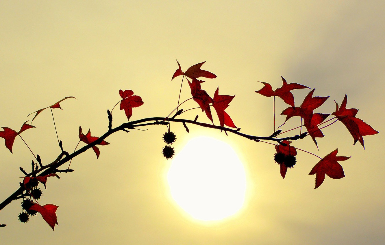 Photo wallpaper leaves, the sun, Branch
